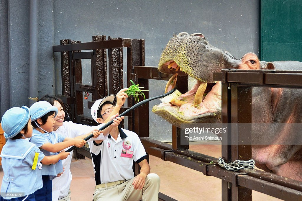 Kindergarten children brush a hippopotamus' teeth as dental and oral health promotion week begins at Adventure World on June 4, 2014 in Shirahama, Wakayama, Japan.