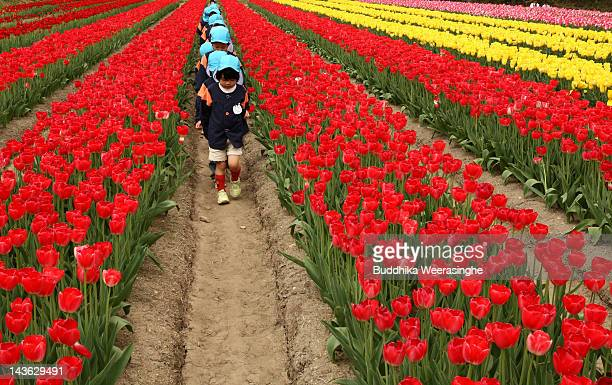 Kindergarten kids walk through the full bloom tulip field at Tanto Tulip Festival on May 1 2012 in Toyooka Japan Hundreds of thousands of tulips in...