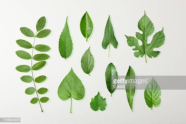 11 kinds of green leaves