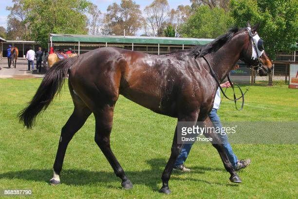 King Kohei in the mounting yard after winning the Specsavers Benalla Maiden Plate on October 31 2017 in Benalla Australia