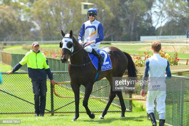 King Kohei ridden by Jordan Childs returns to the mounting yard after winning the Specsavers Benalla Maiden Plate on October 31 2017 in Benalla...
