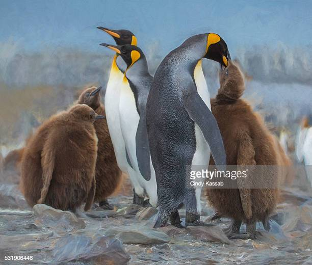 King Penguin chick being fed by one parent while the other two want to be fed