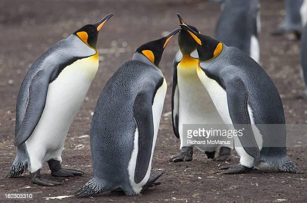 King Penguin meeting.