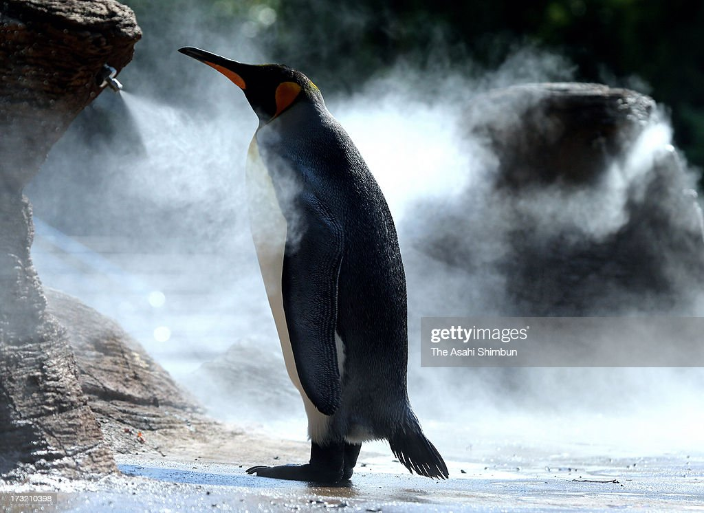 A king penguin stands still in front of a mist shower to cool down in sweltering heat at Higashiyama Zoo on July 9, 2013 in Nagoya, Aichi, Japan. Koshu City of Yamanashi reached 39.1 degrees Celsius and two-third of the 927 Japan Meteorological Agency's observation points recorded more than 35 degrees, killing three people by heat disorder.
