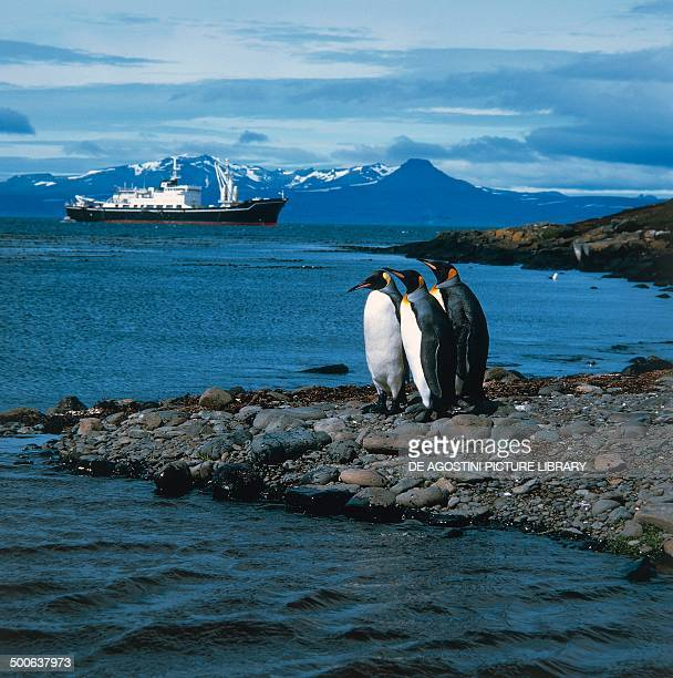 King Penguins and a ship in the background French Southern and Antarctic Lands Overseas Territory of France Antarctica