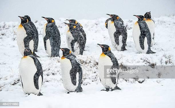 penguins im Schnee mit King-Size-Bett im South Georgia