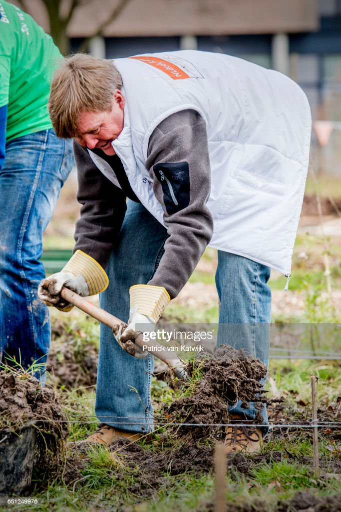 King Willem-Alexander of the Netherlands volunteering for NL Doet in the neighborhood garden on March 08, 2017 in Breda, Netherlands. NL Doet is a National Volunteer day organized by the Oranje Fonds, the King and the Queen are patron and patroness of the foundation.
