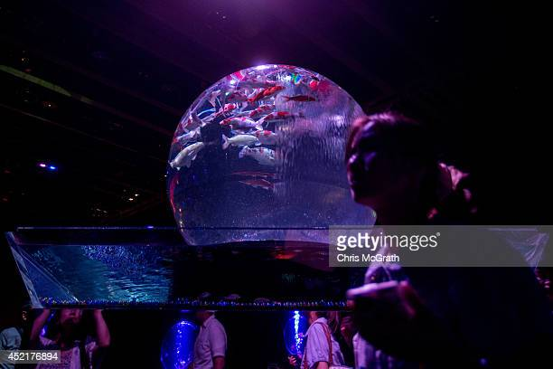 Kingyo are seen in an art aquarium at the 'Eco Edo Nihonbashi Art Aquarium 2014' exhibition at the Nihonbashi Mitsui Hall on July 15 2014 in Tokyo...