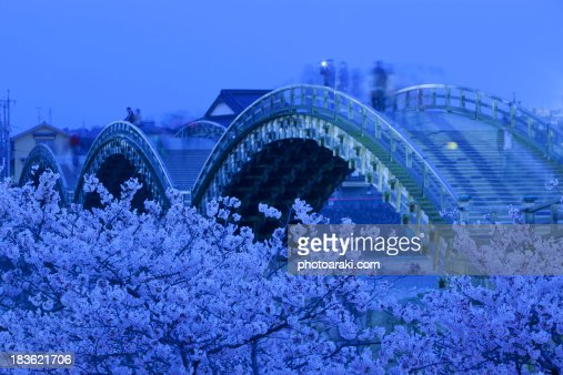Kintai bridge and cherry blossoms at Night