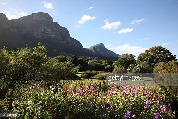 Kirstenbosch Botanic Gardens in Cape Town