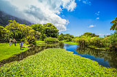 Kirstenbosch Gardens in Cape Town South Africa
