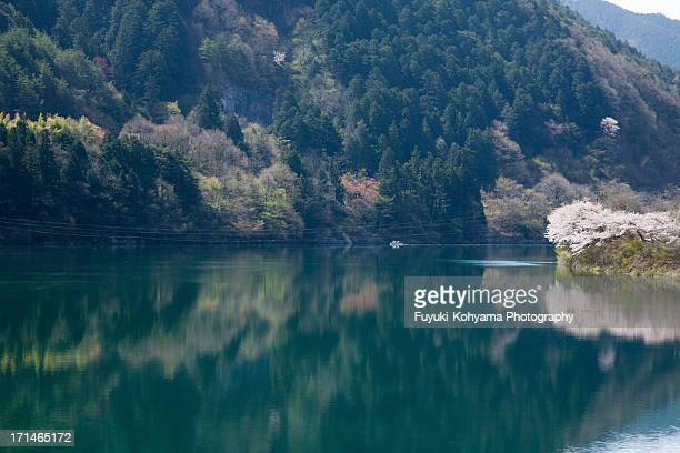Kiso River and Cherry Tree