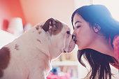 Kissing bulldog puppy