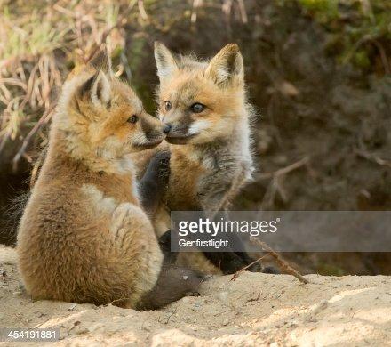 Kissing Cousins : Stock Photo