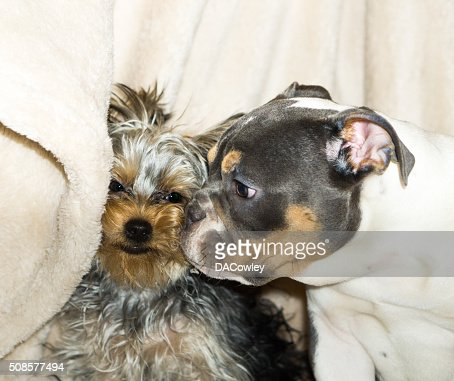 Kissing Puppies : Stock Photo