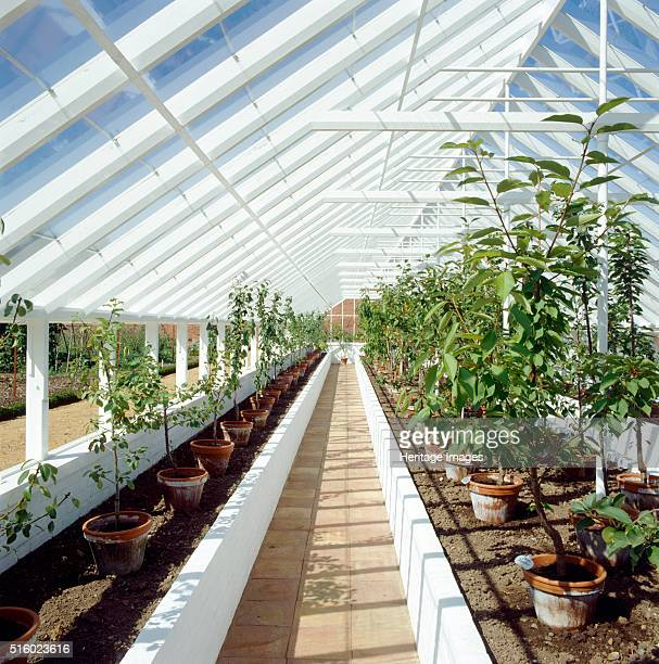 Kitchen garden Audley End House and Gardens Saffron Walden Essex c2000s Interior view of the orchard greenhouse in August Artist Unknown