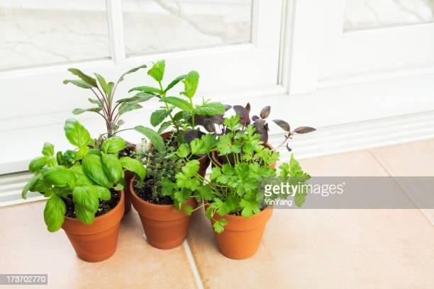 Küche-Kräuter-Garten am Fenster