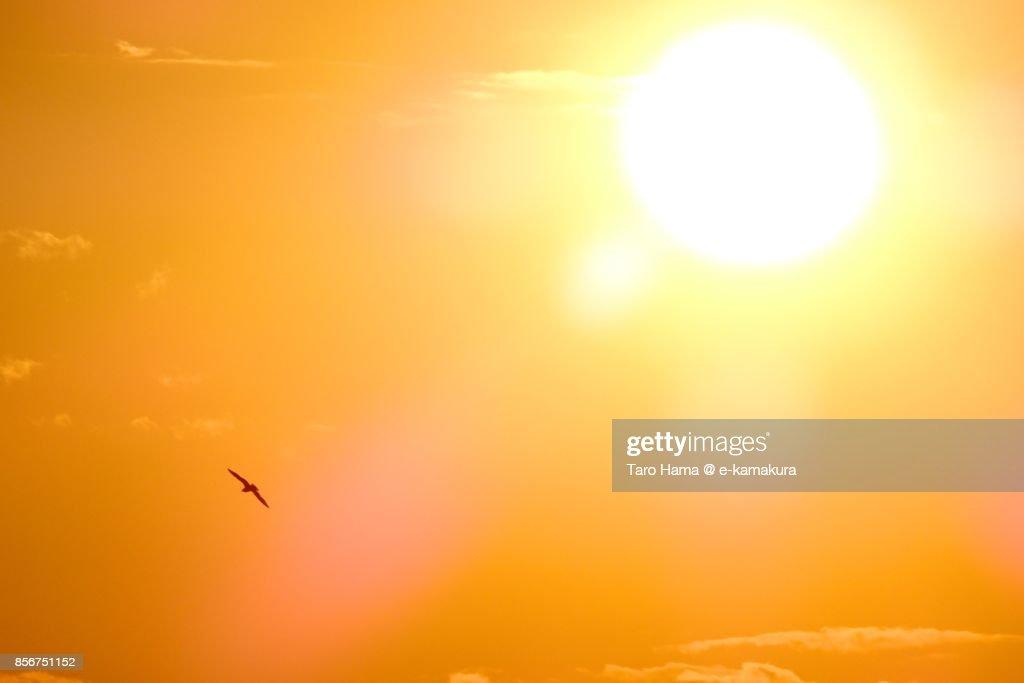 A kite flying around the evening sun : ストックフォト