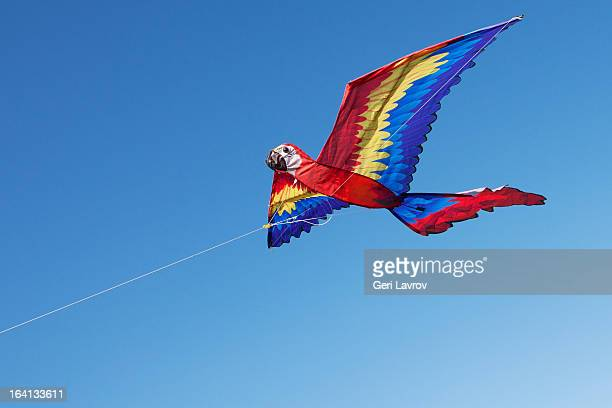 Kite in the form of a macaw flying in the air