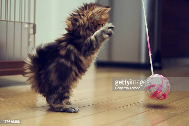 Kitten about to attack ball of wool