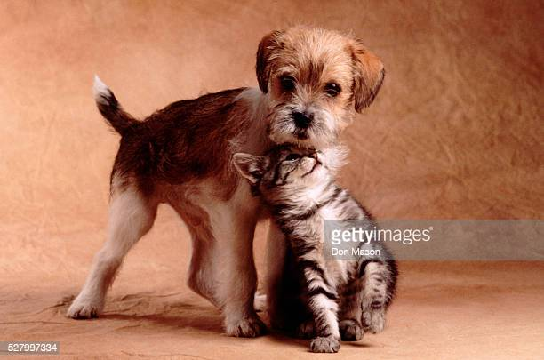 Kitten and Puppy Nuzzling