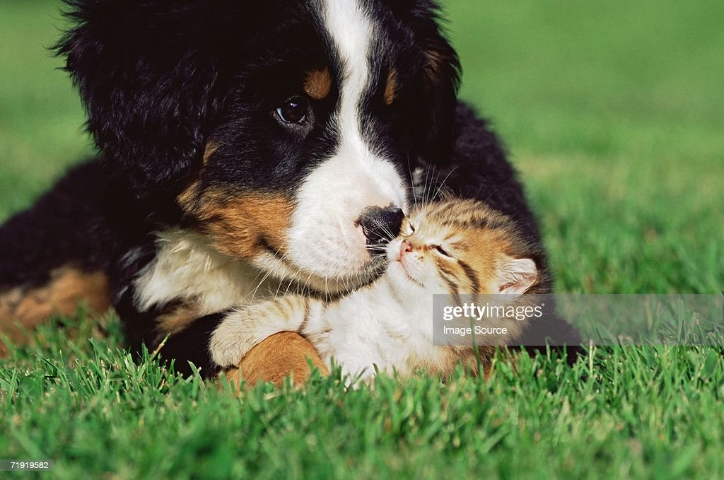 Kitten and puppy on lawn : Stock Photo