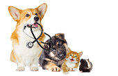 kitten and puppy and stethoscope