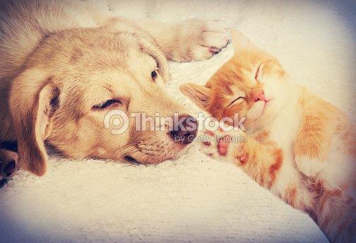 Kitten and puppy sleeping
