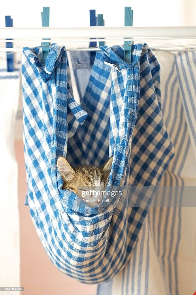 A kitten asleep in a hanging dishcloth : Stock Photo