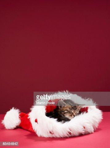 Kitten asleep in Christmas hat : Foto de stock
