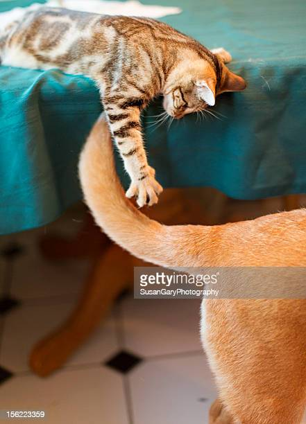 Kitten Attacking Dogs Tail