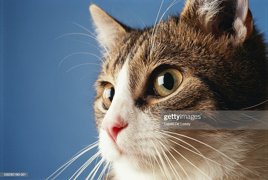 Kitten, close-up, high section : Stock Photo
