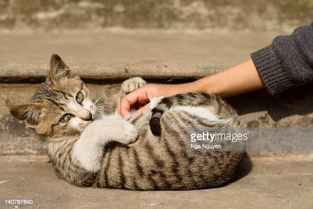 Kitten enjoying belly rub