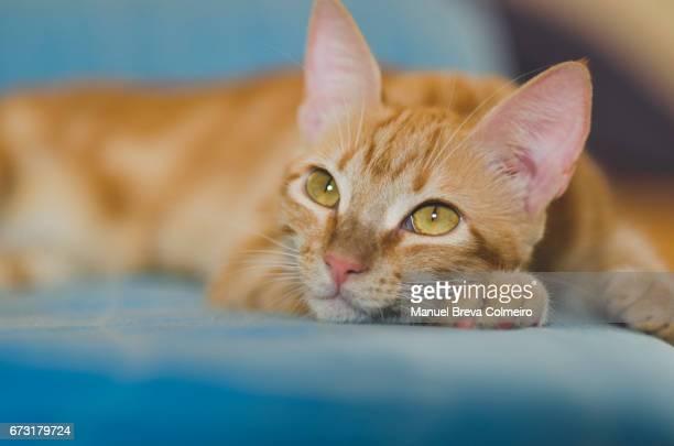 Kitten gaze at infinity