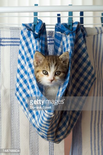 Kitten hanging on a washing line in a dishcloth