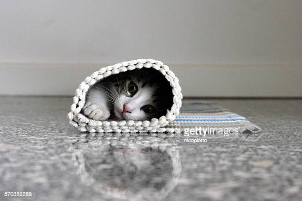 Kitten hidden in rolled up carpet