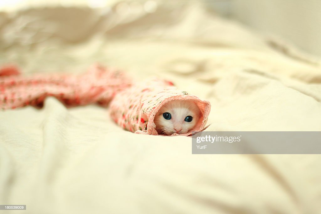 Kitten hiding in a sleeve.