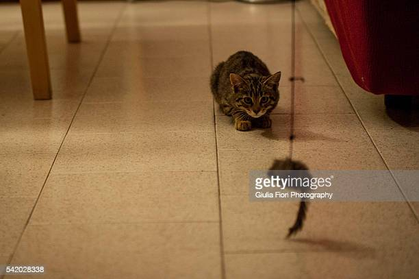 Kitten hunting a mouse toy