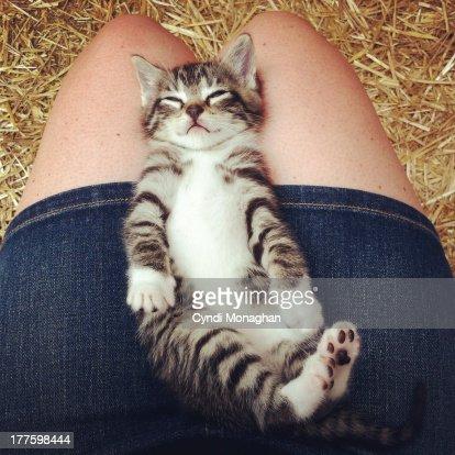 Kitten in a lap
