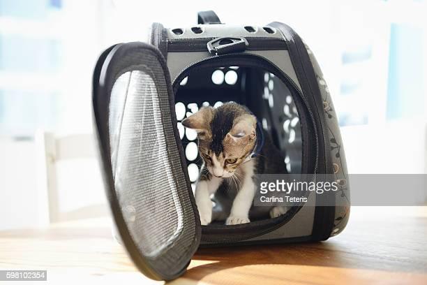 Kitten in a pet carrier