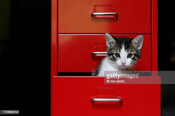 Kitten in a red drawer