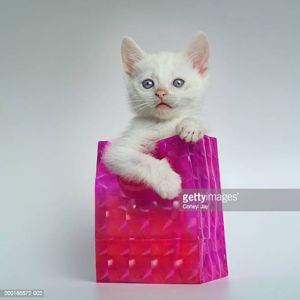Kitten in gift bag