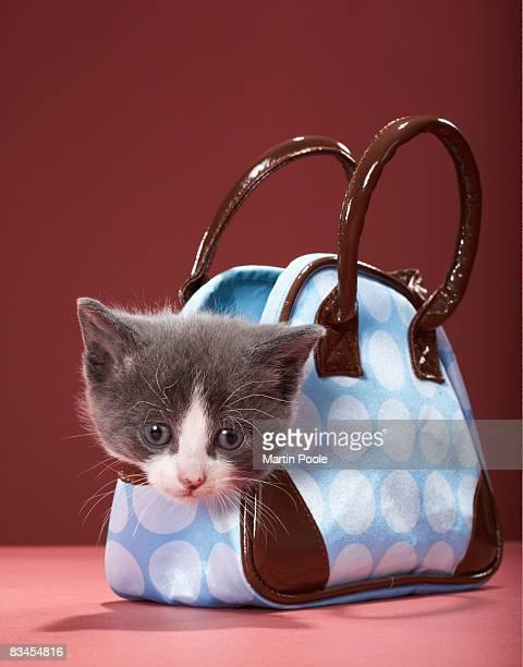 Kitten in handbag