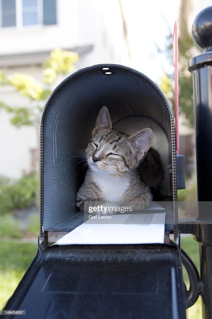 Kitten in mailbox : Stock Photo