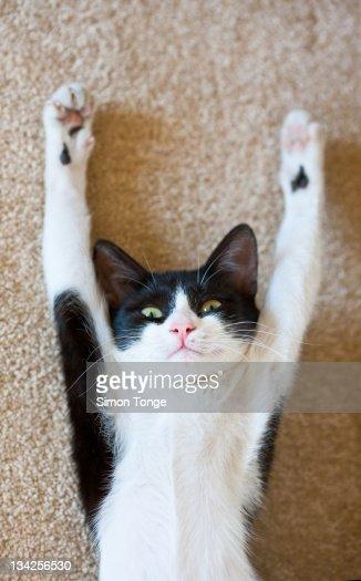 Kitten in sand : Stock Photo
