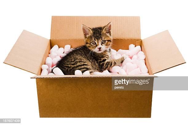 Chaton dans la boîte