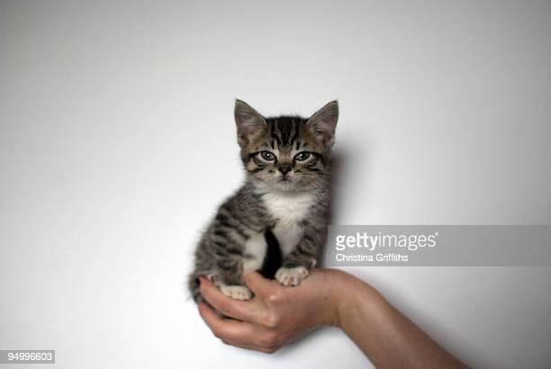 kitten in the hand