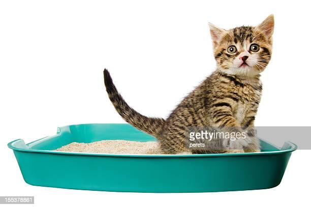 Filhote de Gato na Caixa Sanitária