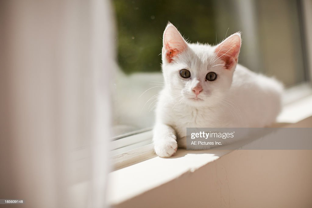Kitten in the window : Stock Photo