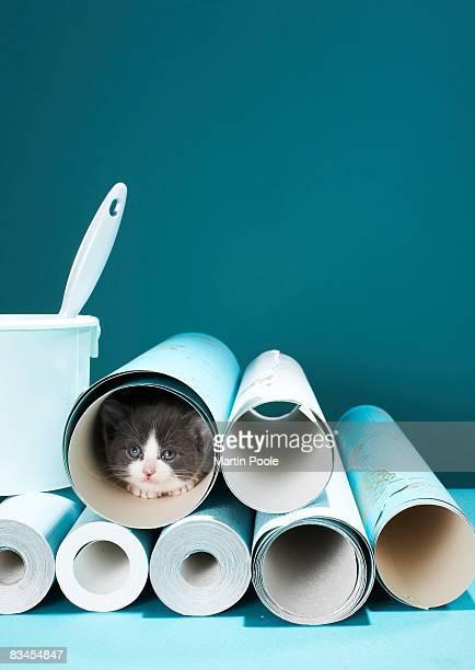 Kitten in wallpaper tube